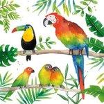 Papieren-servetten-PPD-TROPICAL-BIRDS-Tropische-Papegaai-Toekan-Valk_parkiet-vogels-1332711