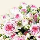 Ambiente-papieren-servetten-MAXIMA-rose-roosjes-cream