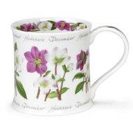 flower-month-bloem-maand-december-Helleborus-Kerstroos-fbC-beker-theetipje