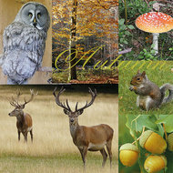 Ambiente-lunch-diner-servetten-AUTUMN-MOOD-herfst-uil-herten-eekhoorn-eikels-paddestoel-33x33cm