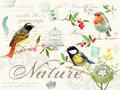 Placemats-kunstof-kurk-NATURE-LES-OISEAUX-vogels-Birdlife-Easy Life-Nuova--40x30cm