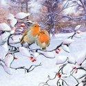 papieren-servetten-lunch-diner-Ambiente-33x33cm-ROBINS_ON_BRANCHE-roodborstjes-tak-sneeuw-winter-33313415