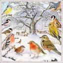 papieren-servetten-lunch-diner-Ambiente-33x33cm-BIRD_MEETING-vogels-bos-roodborstje-vink-winterkoninkje-tak-sneeuw-winter-33313