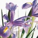 Papieren-servetten-p-20-33x33cm-Blauwe-Iris