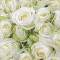 papieren-servetten-lunch-WHITE-ROSES-witte-rozen-33x33cm