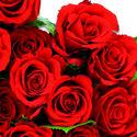 Papieren-servetten-RED-ROSES-boeket-rode-rozen-33x33cm-Ambiente