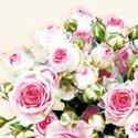 papieren-servetten-Ambiente-MAXIMA-roze-roosjes-cream-33x33cm-lunch-diner-&#x20