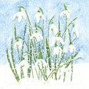 Ambiente-papieren-servetten-SNOWDROPS-Sneeuwklokjes-25x25cm