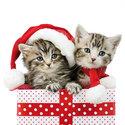 Ambiente-papieren-servetten-CHRISTMAS-KITTENS-Kerst-jonge-katjes-33x33cm