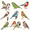 Ambiente-papieren-servetten-COLLECTION-OF-BIRDS-25x25cm-zang-vogels-vink-mus-Pimpelmees-groenling-