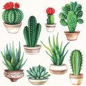 Papieren-servetten-Ambiente-CACTUS-cactussen-planten-vetplanten-lunch-diner-33x33cm