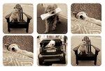 Pimpernel-onderzetters-kunststof-kurk-set/6-PUPPY-CLUB-honden-zwart/wit-10,5x10,5cm