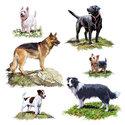 Ambiente-lunch-servetten-DOGS-Hondenrassen-Duitse Herder-Labrador-Terrier-Westie-33x33cm