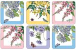 Pimpernel-Portmeirion-onderzetters-Botanic-Garden-TERRACE-Terrasplanten-bloemen