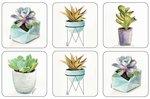 Pimpernel-Portmeirion-hittebestendig-onderzetters-SUCCULENTS-Vetplanten