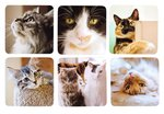 Country-Matters-onderzetters-coasters-12x12cm-Cats-foto's-