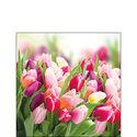 papieren-servetten-GLORIOUS-TULIPS-Tulpen-boeket-coctail-p/20-25x25cm-Ambiente-12512730