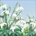 Ambiente-papieren-servetten-SNOWDROPS-Sneeuwklokjes-33x33cm-13312695
